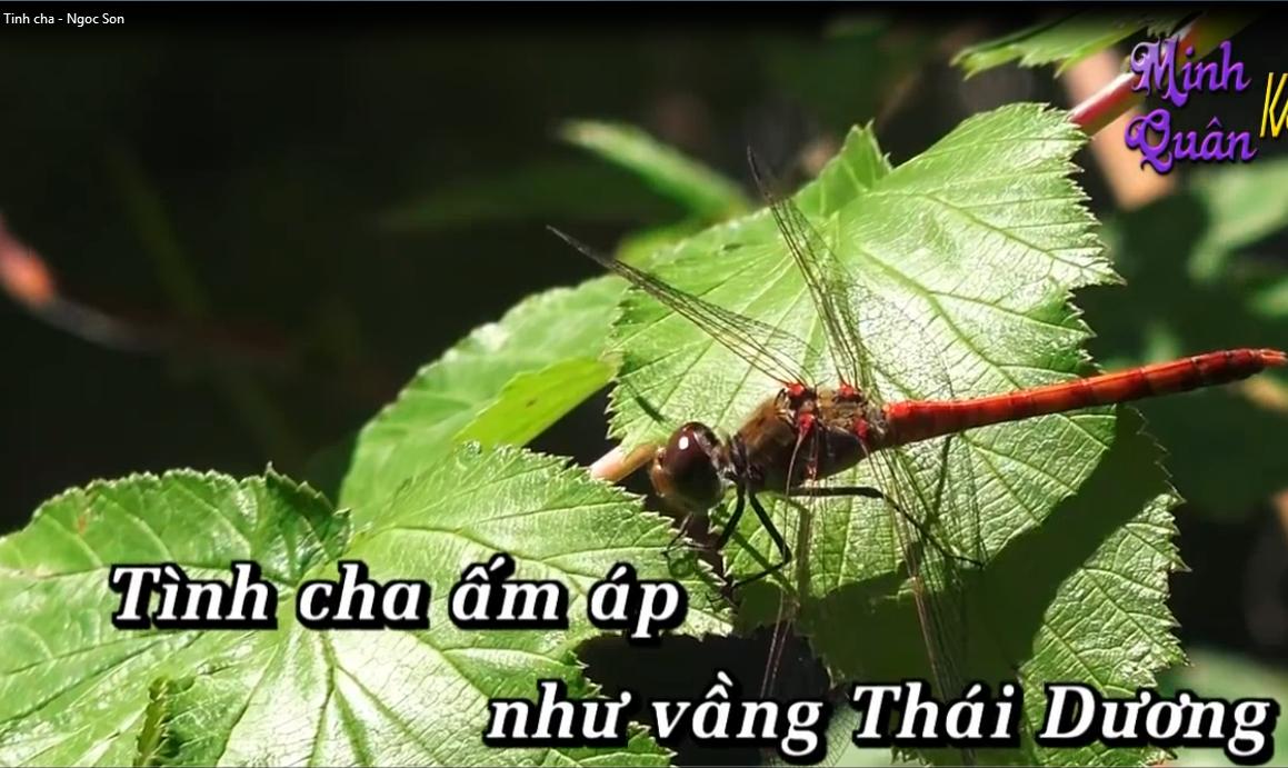 Tinh cha - Karaoke